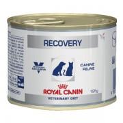 Консерва Royal Canin: Recovery для собак и кошек